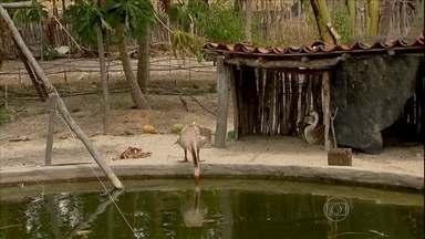 Agricultores buscam alternativas para enfrentar a seca - Os agricultores no Ceará estão conseguindo enfrentar a seca com o uso do sistema de mandala. A produção cresceu e tem gente vendendo o excedente pra municípios vizinhos.