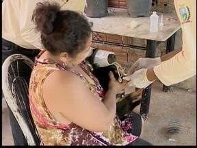 Osvaldo Cruz inicia campanha contra leishmaniose - Quatro pessoas já foram diagnosticadas com doença.