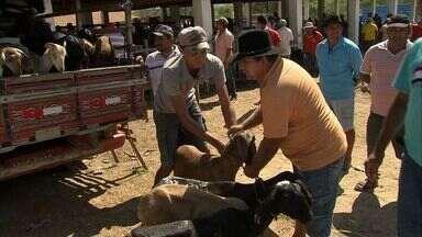 Cidade de Quixadá tem tradicional feira de caprinos e ouvinos - Município recebe visitantes de todo o Nordeste para a feira.