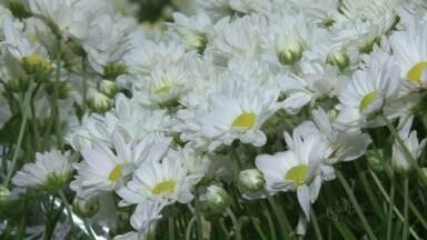 Comércio de Guarapuava reforça estoque de flores para Finados - A variedade é grande entre as flores naturais e artificiais.