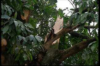 Chuva causa queda de árvores em Suzano - No Parque Maria Helena, a ventania causou estragos e destelhou algumas casas.