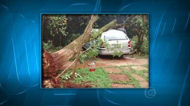 Vendaval derruba árvores e causa prejuízos no Alto Paranaíba - O incidente aconteceu nesta segunda-feira (10) em Patos de Minas.