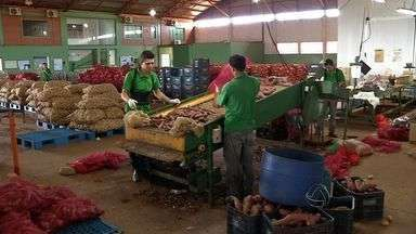 Cooperativa incentiva coleta seletiva entre empresas em Rondonópolis - Cooperativa incentiva coleta seletiva entre empresas em Rondonópolis.