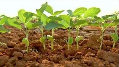 Atraso no plantio da soja no MT pode comprometer as próximas culturas - O atraso foi causado pela estiagem prolongada em outubro. A área semeada desta safra já chega a 93% por cento do total.