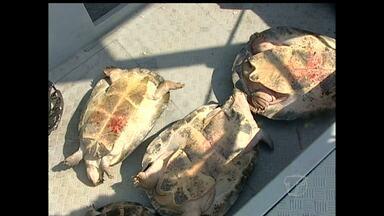 Tartarugas que seriam vendidas clandestinamente são soltas no rio - Operação da Secretaria de Meio Ambiente e PM ocorreu em Alenquer.