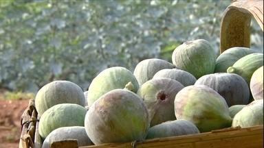 Seca em SP prejudica produção de frutas típicas de Natal - Falta de chuva prejudicou produção de uva, figo e ameixa. Entretanto, os agricultores garantem que, por causa da seca, frutas estão mais doces este ano.