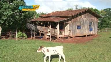 Polícia recupera cabeças de gado roubadas de fazenda em Santo Antônio do Sudoeste - O gado foi encontrado a mais de 300 km da fazenda, no Noroeste do estado.