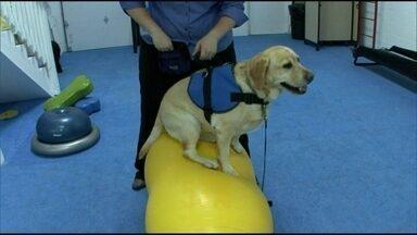 Cães suam a coleira em academia para perder gordura - A academia para cachorros tem piscina, esteira e circuito de ginástica. Os bichos ainda podem relaxar com yoga. Depois da malhação, os animais fazem uma sessão de fotos dentro d'água.