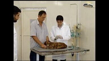 Tratamentos veterinários no noroeste paulista avançam com modernidade - Os tratamentos veterinários estão cada vez mais modernos. Hoje já existe tratamento com células tronco para cães e há técnicas avançadas para o controle de inflamações e problemas neurológicos.