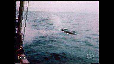 Navios japoneses devem começar nos próximos dias uma pesquisa sobre baleias - Serão estudos de observação sem que os animais sejam caçados. Republicanos assumem maioria no Congresso norte-americano. E a parte principal da cauda do avião que caiu na Ásia é localizada.