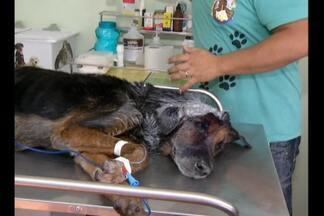 Cachorro é resgatado com queimaduras na cabeça e ferimentos - A suspeita é de que tenham jogado água quente no animal.Maus-tratos a animais é crime previsto em lei.