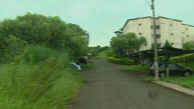 Mato alto gera transtornos em bairro de São Carlos, SP - Mato alto gera transtornos em bairro de São Carlos, SP.