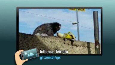 No quadro 'Passa Aqui', telespectador registra Sagui em Curitiba - Jefferson Teixeira filmou o macaco no muro dos fundos da empresa onde trabalha.