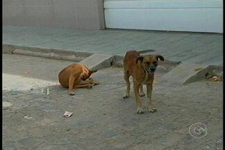 Médico explica o que fazer em caso de mordida de cachorro - Não é difícil encontrar vários cachorros soltos pelas ruas.
