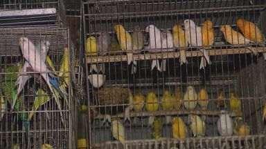 Polícia Ambiental apreende mais de 800 aves em casa de Pirassununga, SP - Polícia Ambiental apreende mais de 800 aves em casa de Pirassununga, SP