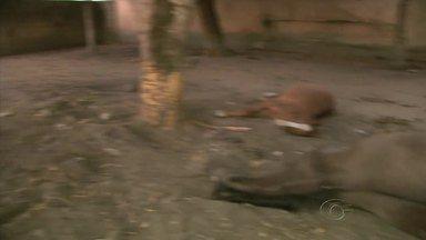 Criador denúncia morte de cavalos por envenenamento em Maceió - Dois cavalos morreram e cinco ficaram em observação em chácara no Village Campestre II.