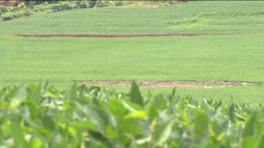 As colheitas da soja já começaram em todo o Paraná - Produtores de Londrina estão preocupados com o preço final para vender o produto