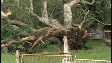 Temporal deixa centenas de famílias sem luz e água em Quaraí, RS - Árvores e postes caíram com a força do vento.
