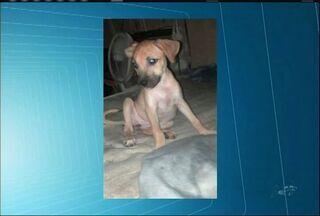 Instituição de Juazeiro do Norte busca pessoas para adotar cães - Veja como ser um doador.