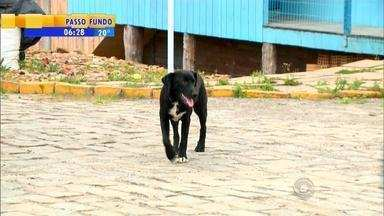 MP denuncia quatro homens suspeitos de envenenamento de animais em Bom Jesus, RS - Foram quase 130 cães e gatos mortos na cidade.