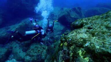 Expedição Terra: Conheça o monitoramento de recifes de coral em Fernando de Noronha - Max Fercondini faz uma viagem para Fernando de Noronha para mostrar como o protocolo Reef Check é realizado nos corais da região