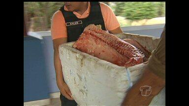Protegido pelo defeso, pirarucu de 80 kg é apreendido em Santarém - Dois pescadores capturaram o peixe na comunidade Ipixuna do Tapará.