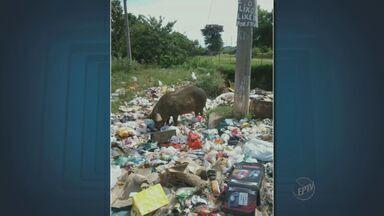 Lixo doméstico acumulado em avenida de Campinas atrai animais - Lixo doméstico acumulado preocupa moradores, e atrai animais na Avenida Maria Julieta de Godoi Cartezani, no Jardim Yeda, em Campinas (SP). Descarte é feito em um terreno a beira de um córrego.