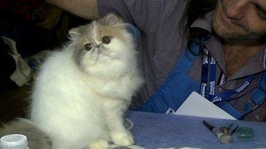 Apaixonados por gatos se reúnem em São Paulo - Eles participam de um encontro, onde os animais são avaliados por juízes internacionais.