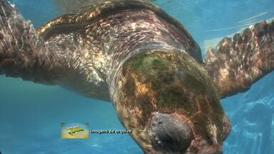 Projeto Tamar comemora os 35 anos na Bahia - Veja um pouco da história do projeto que atende às tartarugas marinas.