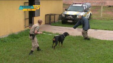 Cães farejadores de Umuarama ajudaram a apreender quase uma tonelada de drogas - Você vai acompanhar agora, um pouco da rotina dos policiais e dos cães que fazem esse trabalho.