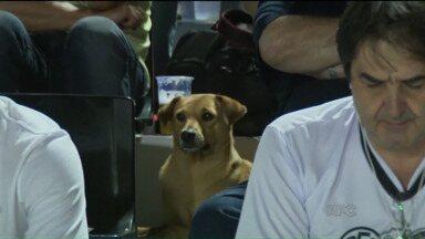 Cão simpático se destaca entre torcedores do Operário-PR - Cachorro apareceu durante o jogo em que o time de Ponta Grossa derrotou o Furacão