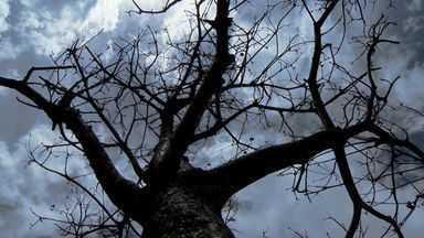 Prefeitura Vitória diz que árvore que caiu levou pancada - Árvore caiu na avenida Saturnino de Brito, na Praia do Canto. Um dos galhos quase atingiu a cabine do caminhão estacionado na rua.