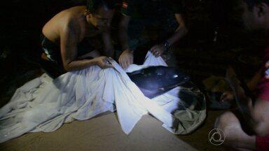 JPB2JP: Não deu certo esquema montado para salvar filhote de baleia - Filhote apareceu na Praia de Tambaú.