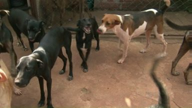Sociedade que cuida de animais em Umuarama está precisando de ajuda - Você pode colaborar doando ração e dinheiro.