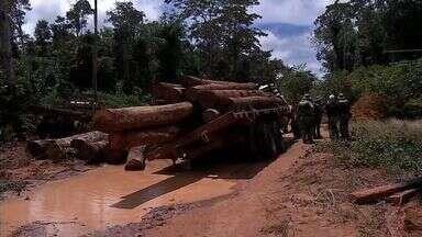 Sema e Ibama apreendem madeira em operação contra o desmatamento em MT - Cerca de 1,5 mil toras foram apreendidas em área de reserva legal de fazenda em Peixoto de Azevedo