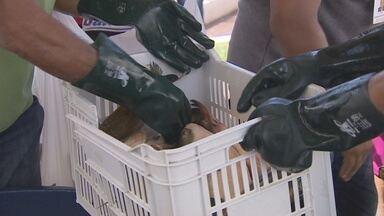 Com baixo preço, procura por peixes aumentam nas feiras de Macapá - Com baixo preço, procura por peixes aumentam nas feiras de Macapá