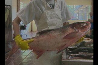 Prato principal da sexta-feira santa, o peixe começa a ser comercializado em Ijuí, RS - A expectativa é de que 8 toneladas de peixe sejam vendidas em três dias de feira.