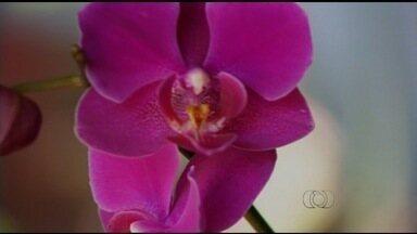 Orquidófilos monitoram flores em Uruaçu, GO - Integrantes do grupo fazem o registro das orquídeas em situação de risco.