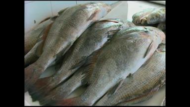 Feira do Peixe começa em Rio Grande, RS - Evento ocorre há dois anos.