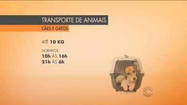Projeto de lei aprovado permite animais em transporte público em Porto Alegre - O animal não pode ser mais de 10 kg.
