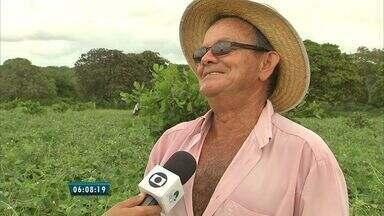 Período de chuvas anima agricultores no interior do Ceará - Agricultores plantam e contam com continuidade das chuvas para haver colheita, em Redenção, no maciço de Baturité.