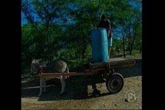 Em Pernambuco 56 municípios estão em situação de emergência - Este ano no sertão pernambucano não choveu o que deveria.