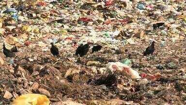 Ministério Público Estadual entra com ação contra municípios que têm lixões a céu aberto - Palmeira dos Índios e Estrela de Alagoas serão notificados por prejuízos ao meio ambiente.
