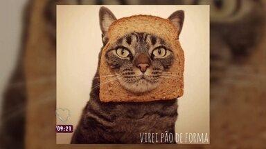 Mais Você mostra animais de estimação que ganham salário de dar inveja - Nadia Bochi conversou com as donas do gato Chico, famoso nas redes sociais