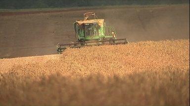 Líder na produção, Paraná colhe safra de feijão e planta a de trigo - Produtividade da lavoura e qualidade dos grãos em 2015.