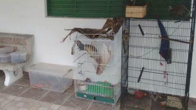 Polícia Ambiental apreende animais silvestres no Vale do Ribeira - As polícias civil e ambiental apreenderam animais silvestres, numa casa em Ilha Comprida, no Vale do Ribeira.