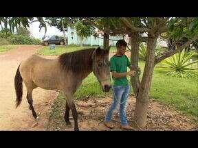 Mulher resgata cavalos da rua, cuida e emprega em equoterapia no DF - Uma psicóloga de Santa Maria, no Distrito Federal, mantém um projeto que já atendeu 150 crianças, na maior parte das vezes pacientes com necessidades especiais. Ela retira cavalos da rua, cuida e emprega em equoterapia.
