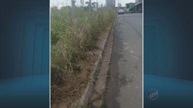 Moradores do Parque São Miguel reclamam de rua sem calçada em Hortolândia, SP - Os pedestres do Parque São Miguel se preocupam com os riscos por terem que andar próximos aos carros.