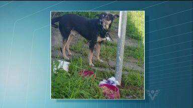 Moradora encontra cachorro abandonado em Guarujá, SP - Animal está amarrado a um poste há cinco dias.