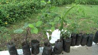 Morador de Arapiraca realiza ação de plantio de mudas - Segundo ele, a ação isolada chamou a atenção da comunidade e assim outras pessoas foram incentivadas a plantar mudas de árvores.